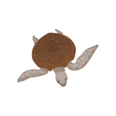 Turtle with brown shell, tortoise reptile animal vector Illustration on a white background