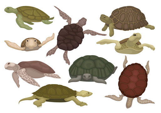 Sea and land turtles set, tortoise reptile animals in various views vector Illustration on a white background