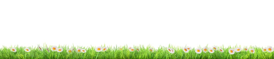 Photo sur Plexiglas Marguerites a green grass with daisy flowers isolated