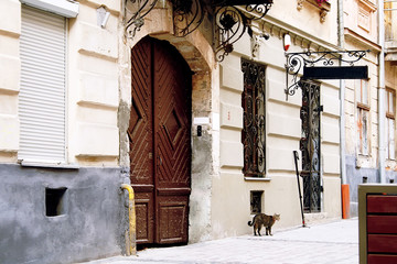 The wall of an old house with a large wooden door, a signboard and wrought-iron bars on the windows. A cat is walking under the window