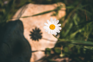 The shadow of the flower