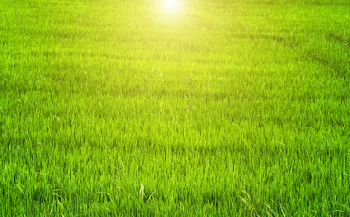 Spring sunset Green backgrounds