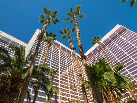 Bottom view to palms and hotel building against blue sky.