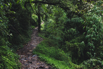 asian bamboo forest path