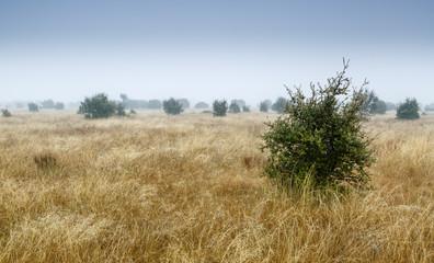 Pradera y matas de encina con niebla de fondo durante el invierno. Quercus ilex.