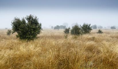 Paisaje con pradera y matas de encina durante el invierno. Quercus ilex.