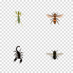 Set of bug realistic symbols with scorpion, fly, mantis and other icons for your web mobile app logo design.