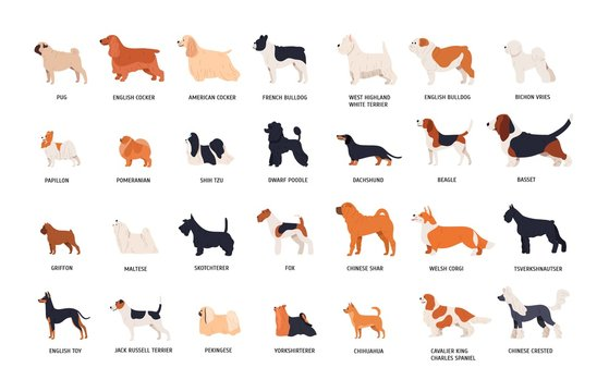 Collection of adorable dogs of various breeds isolated on white background. Bundle of cute funny purebred pets or domestic animals. Side view. Colorful vector illustration in flat cartoon style.