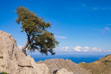Landschaft mit Baum auf Mallorca
