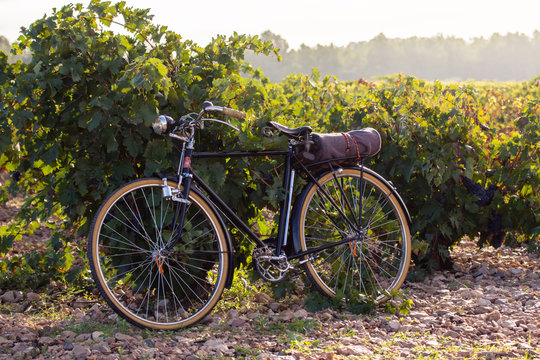 old bicycle in a vineyard, at golden sunrise in Fontanars dels Alforins, small town in the province of Valencia, Spain