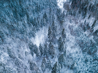 Background texture of a frozen forest at winter, aerial shot