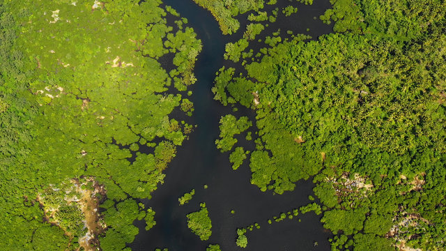 mangrove in aerial view, philippines