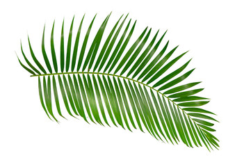 Acrylic Prints Palm tree green palm leaf isolated on white background with clipping path