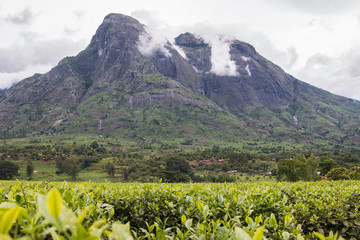 Cloudy sky with Mount Mulanje and tea plantations at the foot of the mountain.