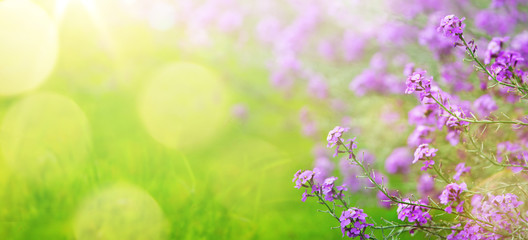 Fototapete - abstract spring floral Background; spring flower and sunny beam