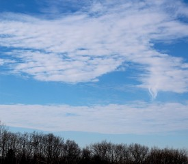 The white cloudscape in the blue sky over top of trees.