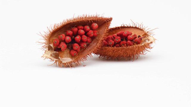 Annatto tree (Bixa orellana L.) of Thailand medicinal properties of the drug