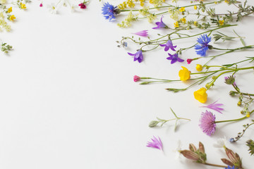 summer flowers on white paper background