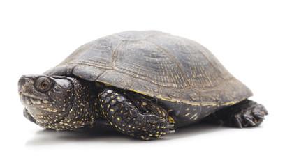 One beautiful turtle.