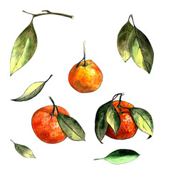 Set of mandarins with leaves on a white background. Drawing markers
