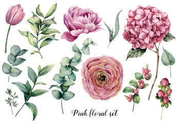 Hand painted floral elements. Watercolor botanical illustration with ranunculus, tulip, peony, hydrangea flowers, berries and eucalyptus leaves isolated on white background.  Nature objects for design