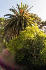 Südafrikanischer Garten mit Palmen