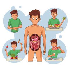 young human body anatomy