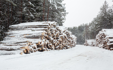 Logging in the snow forest. Stock of timber. Winter road
