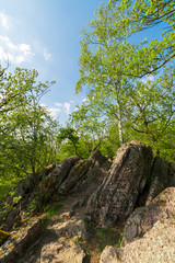 Beautiful green rocky forest while spring day.