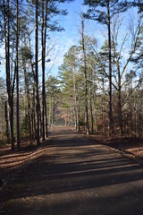 Park road to Travis McNatt Lake in Big Hill Pond State Park Tennessee