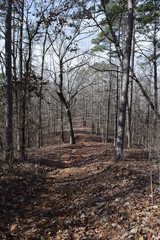 Hiking trail across a hill in Big Hill Pond State Park Tennessee