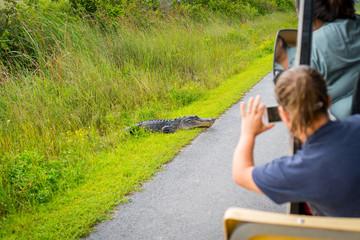 Tourist taking picture of wild crocodile on safari tour