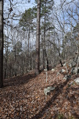 Hiking trail through the forest in Big Hill Pond State Park Tennessee