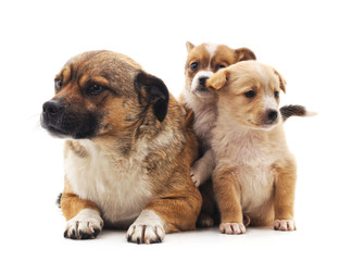 Dog and puppies.