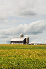 large barn surrounded by soybean field
