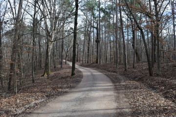 Park Road in Big Hill Pond State Park Tennessee