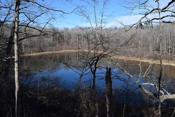 Baker's Pond in Holly Springs National Forest Mississippi