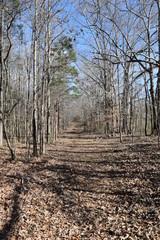 Old road in Davis Bridge Battlefield Tennessee