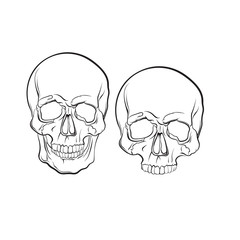Vector illustration of human skull isolated in hand drawn realistic line style. Template for business card poster flyer and banner.