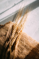 Cut the wheat ears lying on a background of burlap