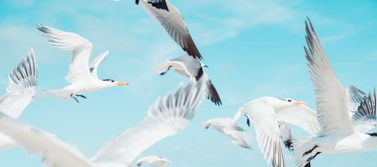 Bird Beach Flight Take Off