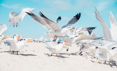 Miami Terns