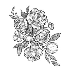 Sketch Floral Botany set. Peony,Fever few,Camellia, Narcissus,Daisy and leaf drawings. Black and white with line art on white background. Hand Drawn Illustrations.Vintage styles.
