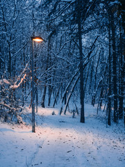 Through the small forest in the winter - lightpost