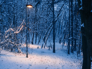 Lightpost in the small forest - winter
