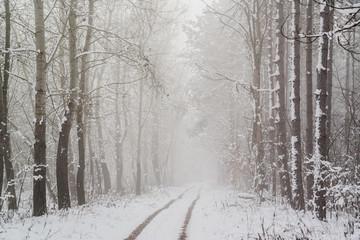 Spoed Foto op Canvas Wit Road in snowy winter forest this is fairytale scene