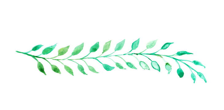 Charming green watercolor leaves in a long stem or branch illustration for a border design or chapter underline divider, hand painted ivy