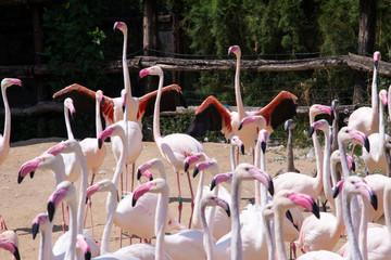 flock of pink flamingo birds