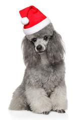 Wall Mural - Poodle dog n Santa red hat
