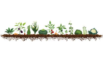 Large Vegetable Garden Illustration
